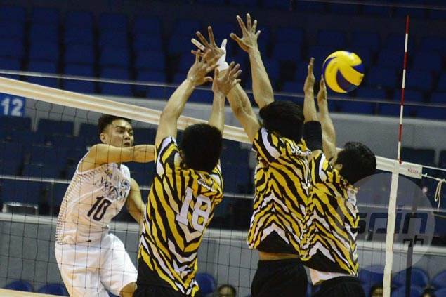 NU Bulldogs fight back from a set down to beat UST Tigers